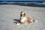 23.06.2012 - Foxi, Morgensonne und Wind am Strand