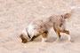 Spuren im Sand suchen
