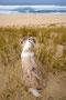 Foxi beobachtet das Frauchen