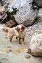 20.05.2012 - Bei dem Fluss Soča in Slowenien