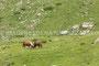 Caballos en La Ripera