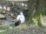 Amigo - Emil auf Entdeckungstour