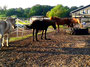 """gechillte Ponyzusammenführung mit den """"Neuen"""""""