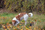 Avanti vom langen Fuchsbau