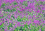 image8    lithograph 44×66cm