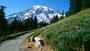 Asphaltierter Weg zum Aussichtspunkt auf den Mount Rainier