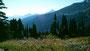 Indian Paintbrush und Lupinen bei Paradise. Im Hintergrund die große Seitenmoräne des Nisquallygletschers, der weit ins Tal herunter reicht.