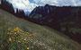 Blumenwiese vor dem Luguntenkopf