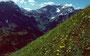 Türkenbund und anderen Blumen im Grashang zum Höferkamm