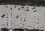 カラスの楽園 チョ・フィウ 神戸朝鮮初中級学校