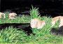 """「""""雑草""""-逆襲」 コ・フンチョル 東大阪朝鮮中級学校"""