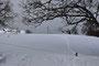 Infolge der Schneehöhe können Weidzäune problemlos übergangen werden