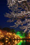 グランプリ 1075「夜桜絢爛」駒形政則