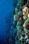 Korallen-Riffwand, Rotes Meer - El Quseir/Ägypten
