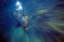 Seelöwenweibchen, Pazifik - Genovesa/Galápagos