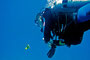 Anemonenfisch trifft Taucher, Rotes Meer - Mangrove Bay/Ägypten
