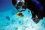 Anemonenfisch vs. Taucher, Rotes Meer - Mangrove Bay/Ägypten