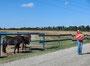 1. Besuch bei den pferden
