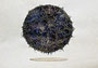 黒い太陽|2011|紙、水彩、アクリル|個人蔵