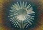 散光 2015 油彩、キャンバス 21.0cm×14.8cm 個人蔵