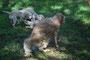 Calando: Wie hund sich schüttelt!