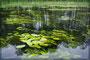 Wasserpflanzen Krutynia