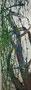 Birke im Frühling, 2016, 120 x 40 cm, Öl auf Leinwand
