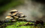 Pilze - Mushrooms (56)