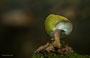 Pilze - Mushrooms (61)