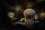 Pilze - Mushrooms (31)