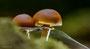 Pilze - Mushrooms (22)