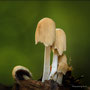 Pilze - Mushrooms (46)