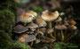 Pilze - Mushrooms (54)