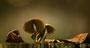 Pilze - Mushrooms (45)
