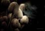 Pilze - Mushrooms (1)