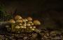 Pilze - Mushrooms (40)