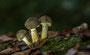 Pilze - Mushrooms (64)