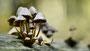 Pilze - Mushrooms (18)