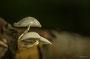 Pilze - Mushrooms (35)
