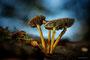 Pilze - Mushrooms (30)