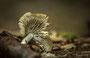 Pilze - Mushrooms (53)