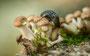 Pilze - Mushrooms (57)