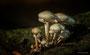 Pilze - Mushrooms (49)