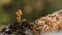 Pilze - Mushrooms (47)