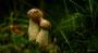 Pilze - Mushrooms (13)