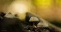 Pilze - Mushrooms (17)