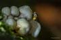 Pilze - Mushrooms (20)