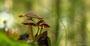 Pilze - Mushrooms (14)