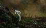 Pilze - Mushrooms (62)