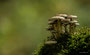 Pilze - Mushrooms (9)